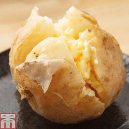 Potato 'Cara'