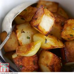 Potato 'Golden Wonder'