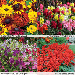 Annual Bedding Collection
