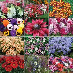 Annual 'Summer Bedding' Collection