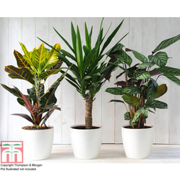 Green Houseplants Trio (House Plant)