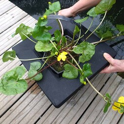 Floating Aquatic Planting Basket 35cm