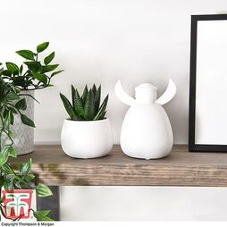 Angie angel with plant and pot set