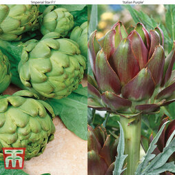 Artichoke Collection