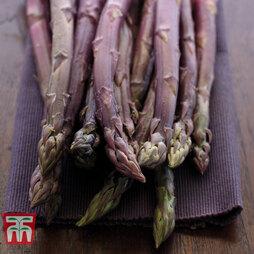 Asparagus 'Burgundine' (Spring/ Autumn Planting)