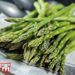 Asparagus 'Gijnlim' (Spring/ Autumn Planting)