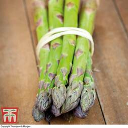 Asparagus officinalis 'Pacific 2000' (Spring/Autumn Planting)