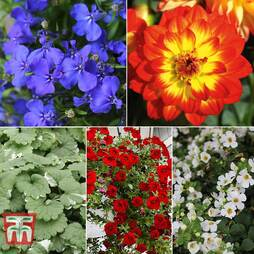 Colour Hanging Basket Collection