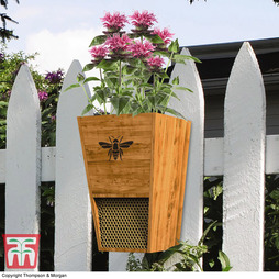 Bee House and Planter - Gift
