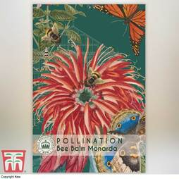 Bee Balm - Kew Pollination Collection
