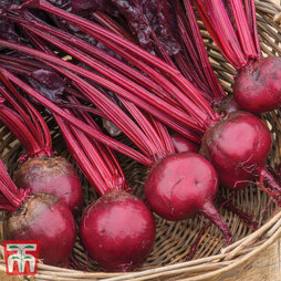 Beetroot 'Morello'
