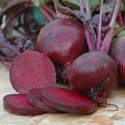 Beetroot 'Boltardy' (Start-A-Garden™ Range)