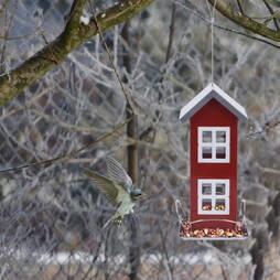 idooka Green House Bird Feeder