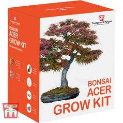Bonsai Acer Growing Kit