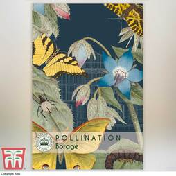 Borage - Kew Pollination Collection