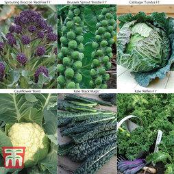 Brassica Autumn & Winter Collection