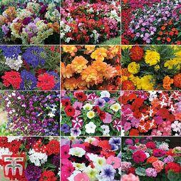 Nurserymans Choice Garden Ready Plants