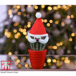 Cactus with Santa Face and Hat - Gift