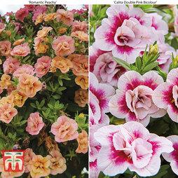 Calibrachoa 'Rosebud Duo'