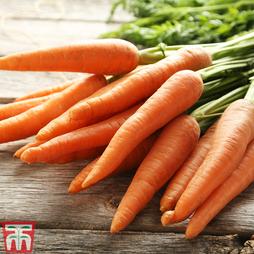 Carrot 'St. Valery'