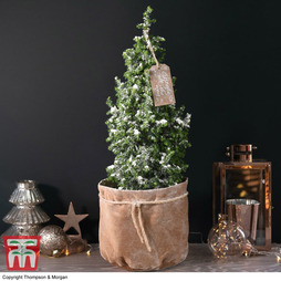 Indoor Christmas Tree in Velvet Bag