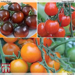 Coloured Salad Tomato Collection