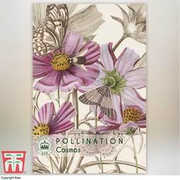 Cosmos bipinnatus - Kew Pollination Collection