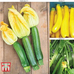 Courgette Colour Collection