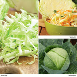 Cabbage 'Autumn Mix'