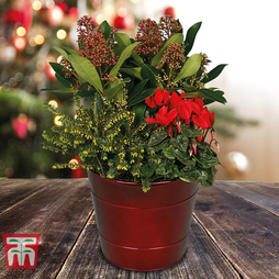 Christmas Passion Planter - Gift