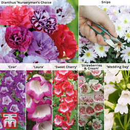 Perennial Cottage Garden Collection