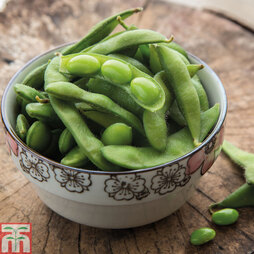 Edamame 'Green Shell'