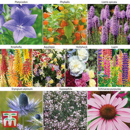 Perennial Border Collection