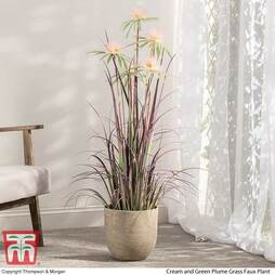 Plume Grass (Faux Plant ) - Gift