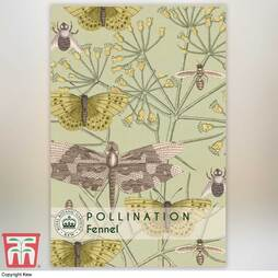 Fennel - Kew Pollination Collection