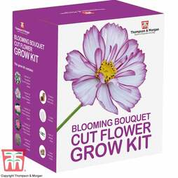 Blooming Bouquet Cut Flower Growing Kit - Gift