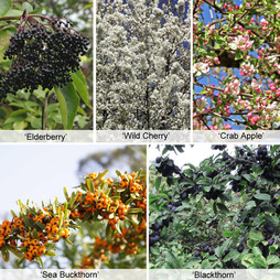 Foragers Hedging Collection