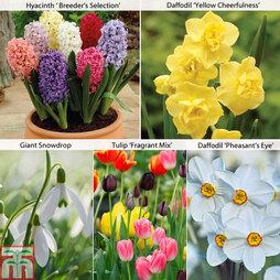 Fragrant Spring Bulb Mix