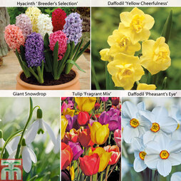 Fragrant Spring Bulb Mix