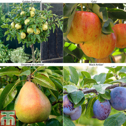 Fruit Tree Collection (Mini Fruit Tree)