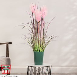 Reed Grass (Faux Plant) - Gift
