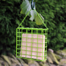 Kingfisher Suet Cake Feeder