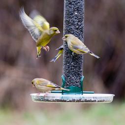 Droll Yankees Large Lifetime Seed Feeder