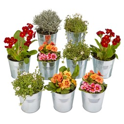 Garden Grow Ninepiece Zinc Planter Set