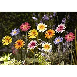 Metal Daisy Stakes - Gift