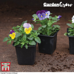 Garden Grow Black Grow Pots
