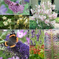 Garden Value Bundle