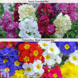 Garden Ready Super Scented Collection