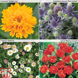 Garden Ready Perennial Collection