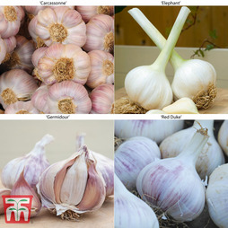 Garlic Autumn Planting Collection